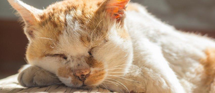5 טיפים לשמירת בריאותו של חתול