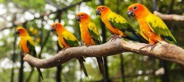 מחלקת ציפורים